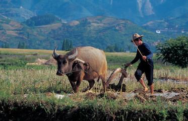 중국의 자연 풍경