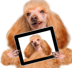 dog taking a selfie with a tablet