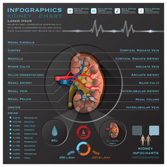 Kidney Medical Infographic Infochart
