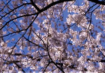 아름다운 봄
