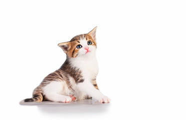 Lovely kitten with sad eyes isolated on white