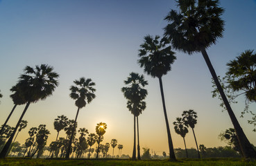 palm trees on the background of a beautiful sunrise
