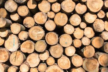 Foto op Textielframe Brandhout textuur Holztextur Hintergrund