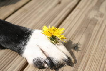 Pfote mit Blume