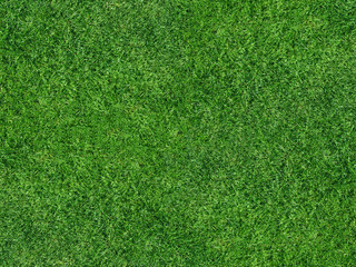 Rasenfläche