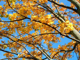 Low angle view of an autumn tree