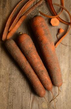 Fresh carrots high in sandy soil