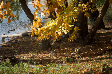 Autumn trees at lakeside