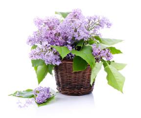 Fototapeta Lilac bouquet in a wicker basket obraz