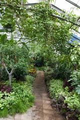 Plants in a greenhouse, Allan Gardens, Toronto, Ontario, Canada