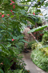 Gardener watering in a greenhouse, Allan Gardens, Toronto, Ontar