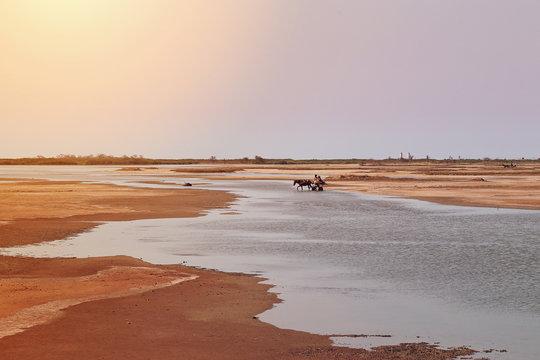 calèche dans la région du Sine Saloum