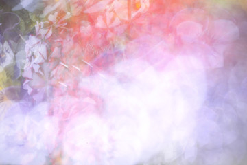 An abstract background photo impression of verbena flowers