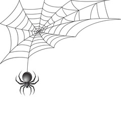 Black spider with web background
