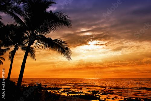 Hawaiian sunset with tropical palm tree silhouettes