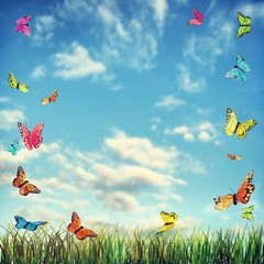 Bright summer background with butterflies and grass