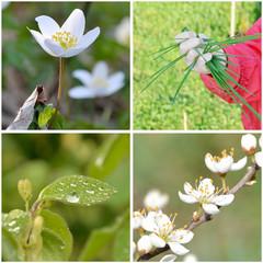 Frühlings Motive