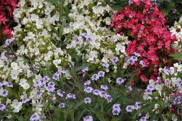 Schlichte bunte Blüten im Garten
