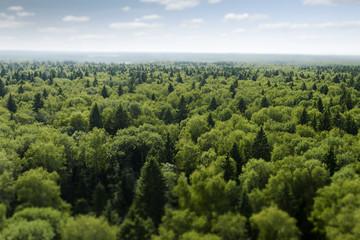 Papiers peints Forets flight over forest