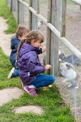 Two kids feeding rabbits