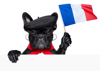 Wall Mural - french dog
