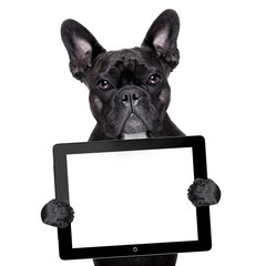dog with tablet pc