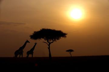 Two giraffes over sunrise