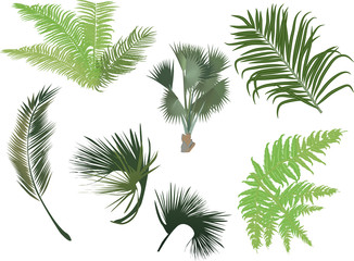 green palm and fern leaves isolated on white