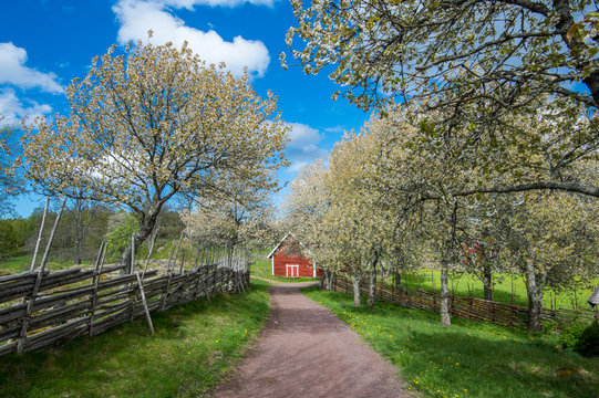 Idyllic Sweden at springtime - sunny day in Småland in early May