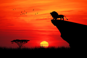 Photo sur Plexiglas Brique Lion on rope at sunset