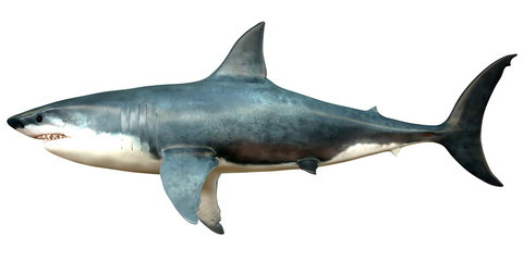 Megalodon Side Profile