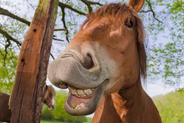 Horse - Sun&Fun