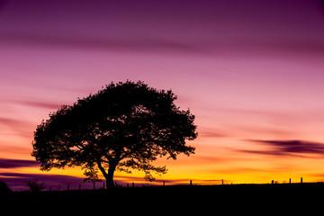Eichen baum silhouette im sonnenuntergang in der eifel