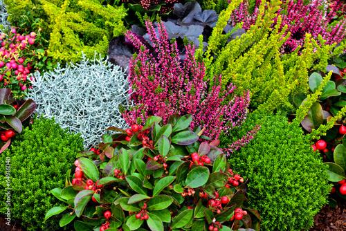 grabpflanzen stockfotos und lizenzfreie bilder auf bild 64916040. Black Bedroom Furniture Sets. Home Design Ideas