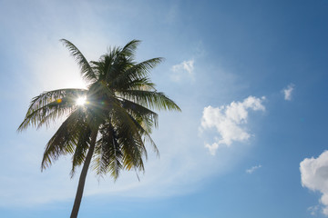 An image of  palm trees in the blue sunny sky