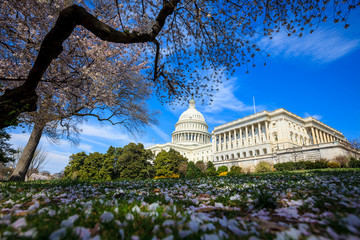 Fototapete - US Capitol Building - Washington DC United States