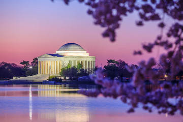 Fototapete - the Jefferson Memorial during the Cherry Blossom Festival