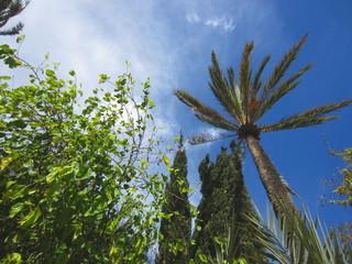 mediterranean foliage