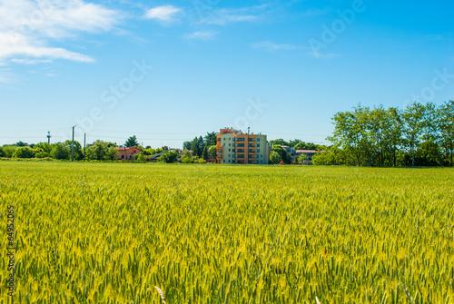 Paesaggio Di Campagna Campo Di Grano Estate Stock Photo And