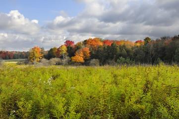 Wall Mural - Field in Autumn