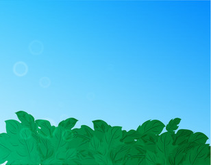 Nature background with green grass and blue sky