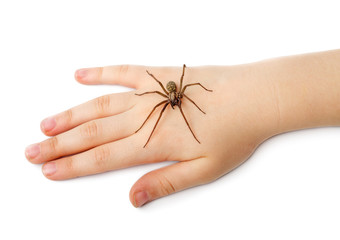 Spider on the human hand