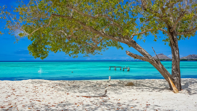 Beach in Caribbean with a tree