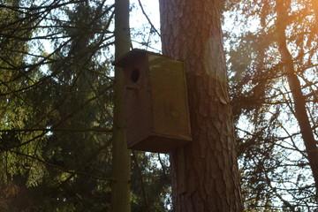 Birdhouse in a forest near Greifswald