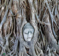 The Head of sandstone Buddha in tree roots