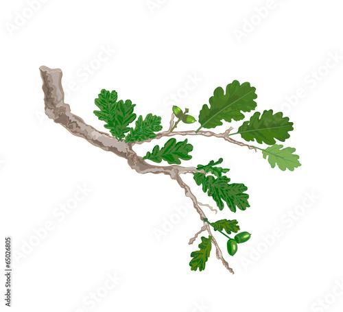 Oak tree drawing  Etsy