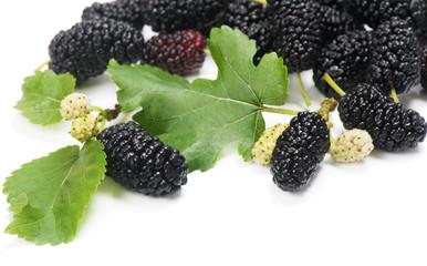 Black mulberries with leaves   (Morus nigra L.).