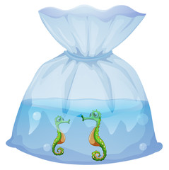 A pouch with seahorses