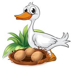 A duck beside her nest
