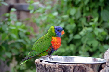 single colorful tropical parrot photo